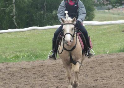 oboz-konie-2014-2-0024