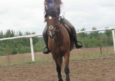 oboz-konie-2014-2-0026