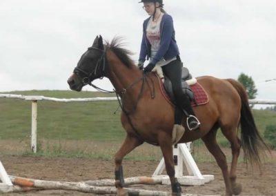 oboz-konie-2014-2-0027