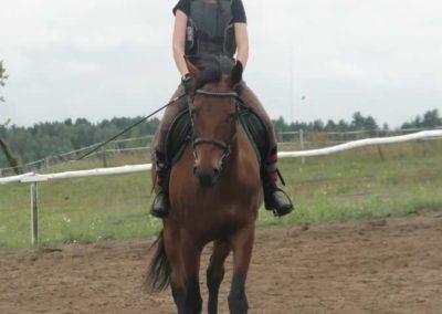 oboz-konie-2014-2-0028