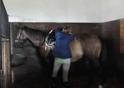 oboz-konie-2014-2-0074