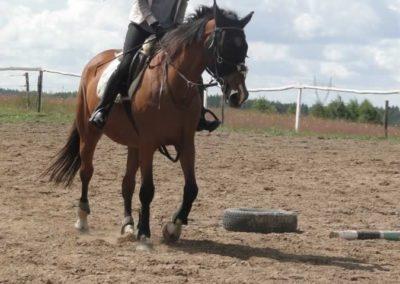 oboz-konie-2014-3-0006