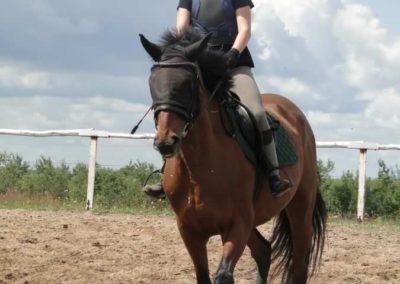 oboz-konie-2014-3-0012