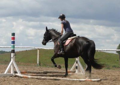 oboz-konie-2014-3-0014