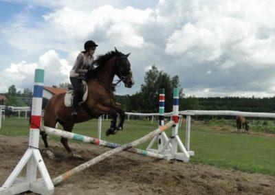 oboz-konie-2014-3-0026