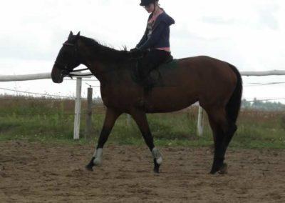 oboz-konie-2014-3-0046