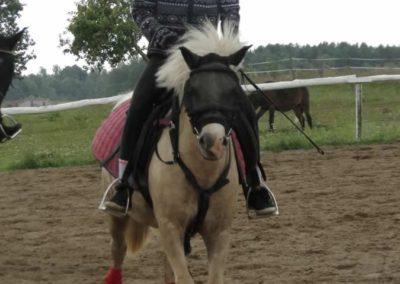 oboz-konie-2014-3-0049
