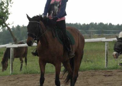 oboz-konie-2014-3-0050