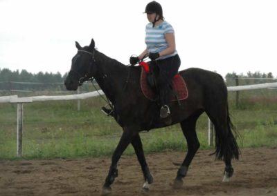 oboz-konie-2014-3-0051