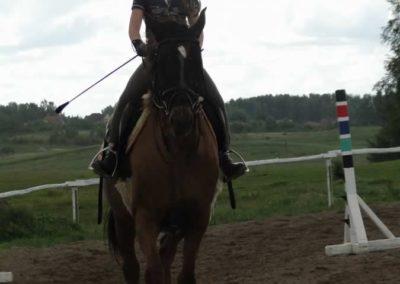 oboz-konie-2014-3-0052