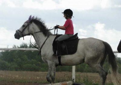 oboz-konie-2014-3-0053