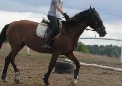 oboz-konie-2014-3-0066