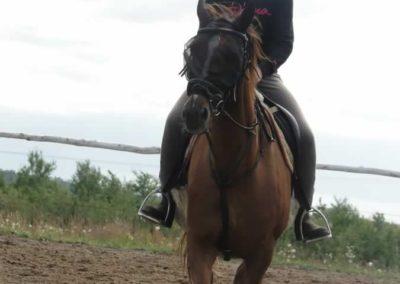 oboz-konie-2014-3-0068