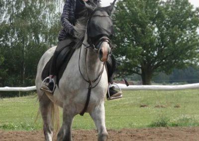 oboz-konie-2014-3-0069