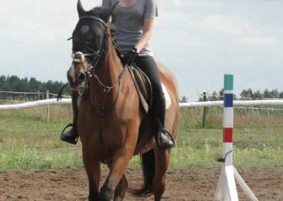 oboz-konie-2014-3-0070