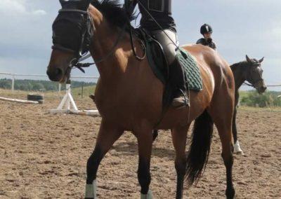 oboz-konie-2014-3-0077