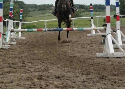 oboz-konie-2014-3-0079