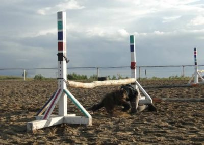 oboz-konie-2014-3-0099