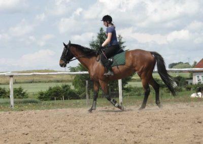 oboz-konie-2014-4-0008