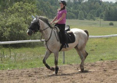 oboz-konie-2014-4-0009