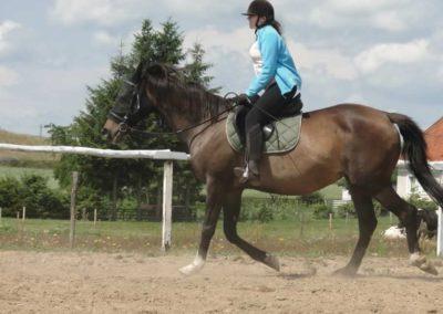 oboz-konie-2014-4-0011