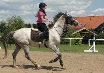 oboz-konie-2014-4-0020