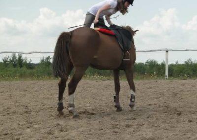 oboz-konie-2014-4-0027