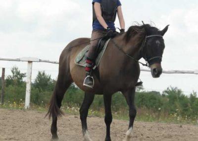 oboz-konie-2014-4-0033