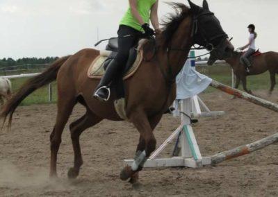 oboz-konie-2014-4-0034