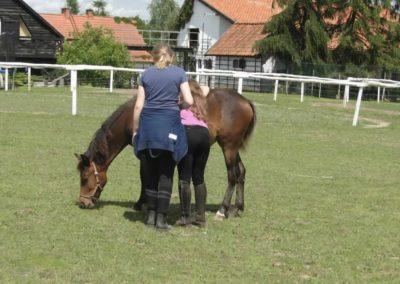 oboz-konie-2014-4-0068