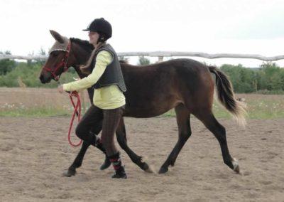 oboz-konie-2014-4-0082