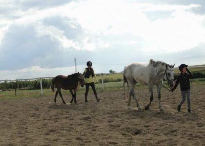 oboz-konie-2014-4-0087