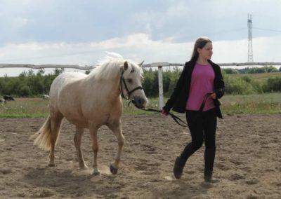 oboz-konie-2014-4-0088