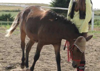 oboz-konie-2014-4-0089