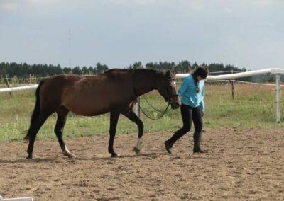 oboz-konie-2014-4-0091