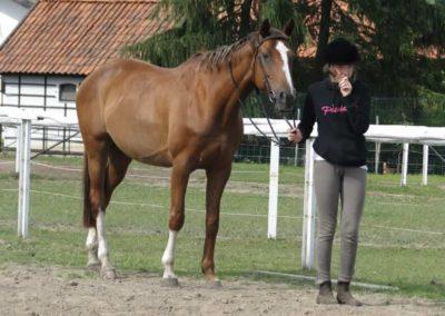 oboz-konie-2014-4-0092