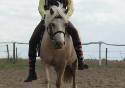 oboz-konie-2014-4-0094