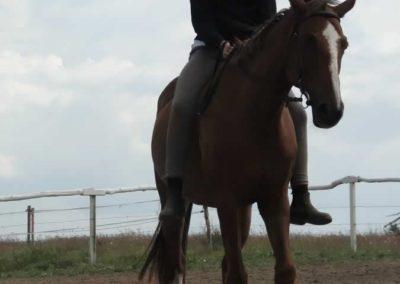 oboz-konie-2014-4-0095