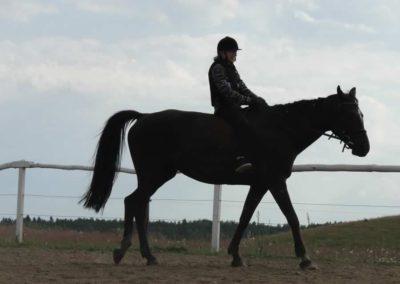 oboz-konie-2014-4-0096