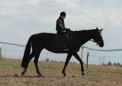oboz-konie-2014-4-0100