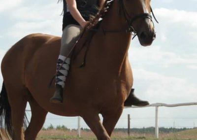 oboz-konie-2014-4-0108