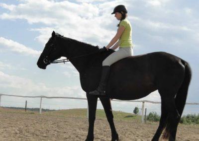 oboz-konie-2014-4-0113