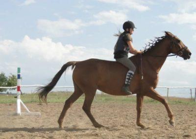 oboz-konie-2014-4-0114