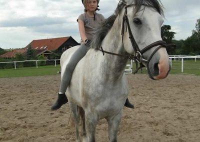oboz-konie-2014-4-0126