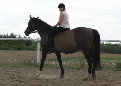 oboz-konie-2014-4-0136