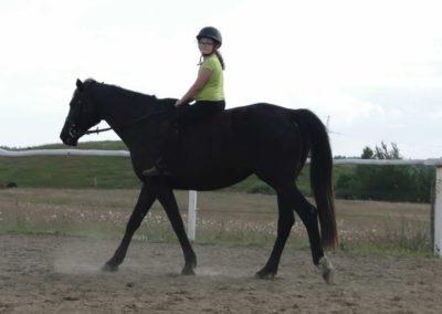 oboz-konie-2014-4-0137