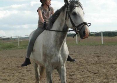 oboz-konie-2014-4-0144
