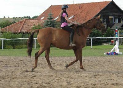 oboz-konie-2014-4-0145