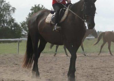 oboz-konie-2014-5-0004