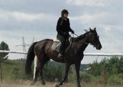 oboz-konie-2014-5-0009